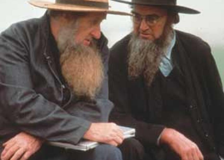 Officers Describe Bizarre Amish Beard Cutting Canadian Mennonite Magazine
