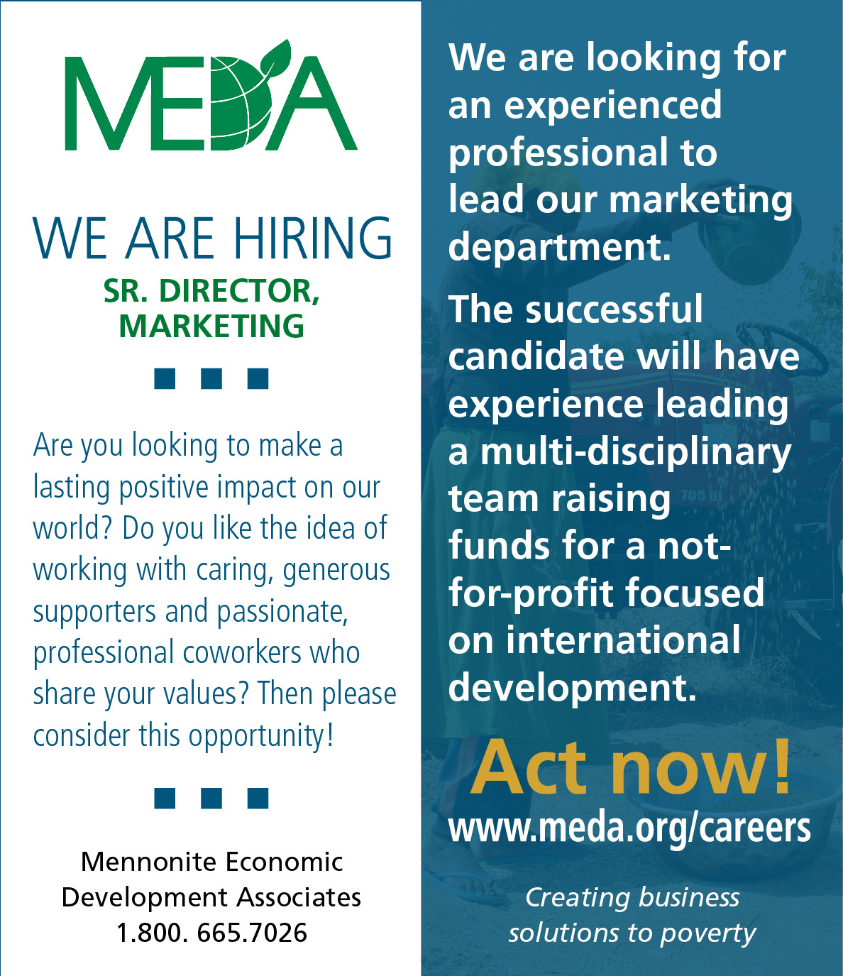 MEDA marketing director