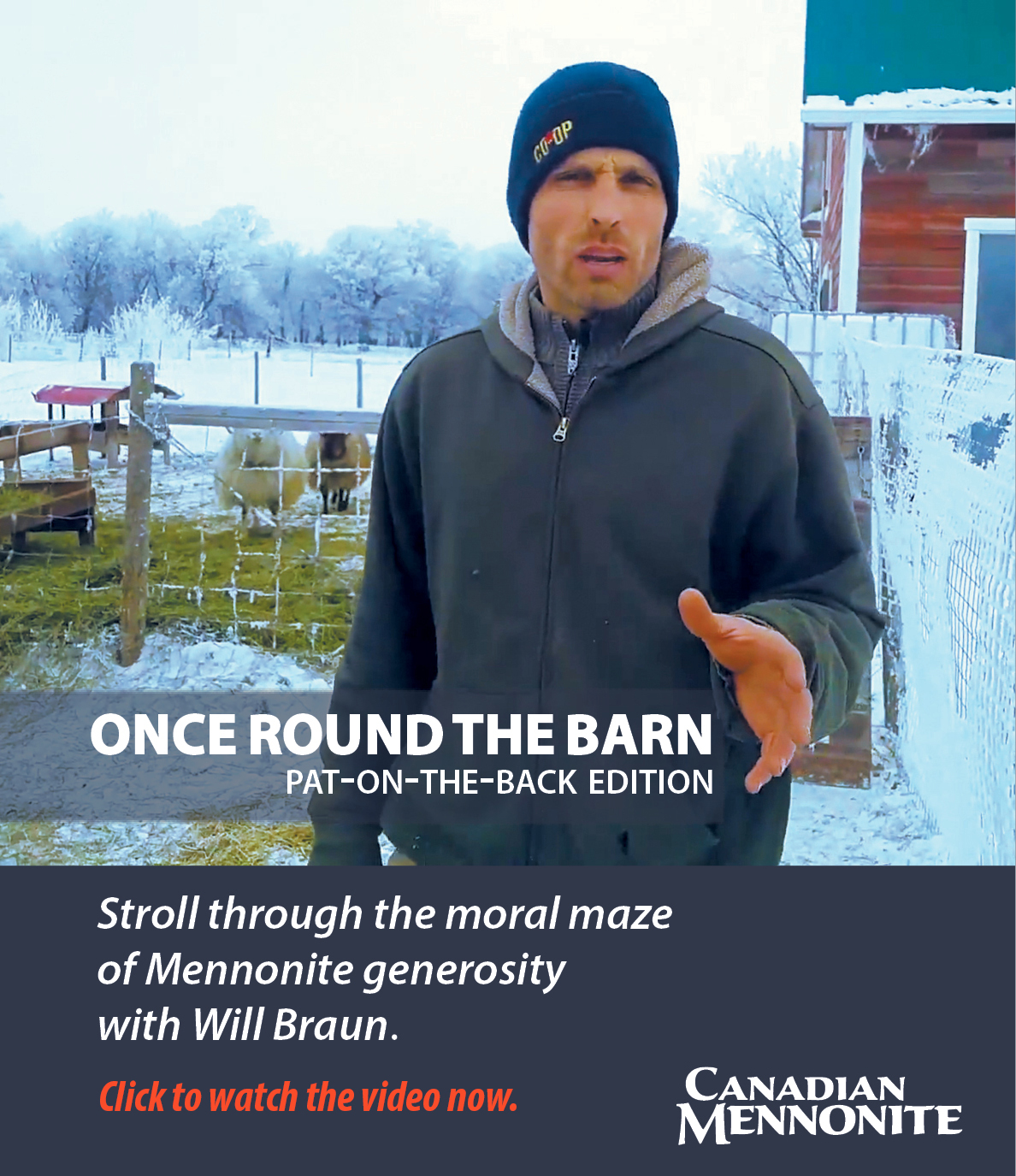 Will Braun's Once Round the Barn rant on Mennonite giving